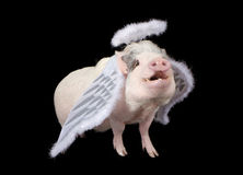 Wenn Schweine fliegen stockfoto