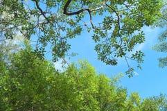 Wenn Sie oben im Wald schauen lizenzfreie stockfotos