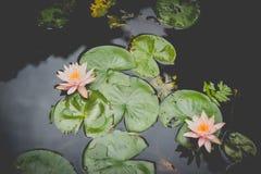 Wenshuklooster, Chengdu, China, lotusbloembloem royalty-vrije stock foto