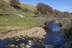 Wensleydale nos vales de Yorkshire - Inglaterra Imagens de Stock