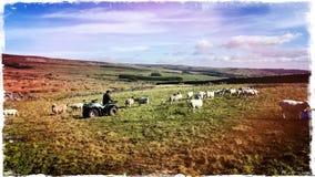 Wensleydale Yorkshire rolnik zdjęcia stock