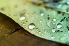 Rain pools Stock Image