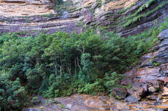 Wentworth falls gorge forest Stock Images