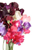 Wer sweet pea bouquet. Wet sweet pea bouquet, isolated on white Stock Photos