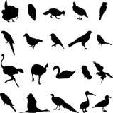 Wereld-beroemde vogel Royalty-vrije Stock Foto