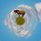 Wereld van eenzaam paard Stock Afbeeldingen