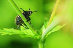 Wereld van insecten Royalty-vrije Stock Afbeelding