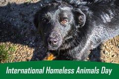 Werelddag van verdwaalde dieren 18 August International Homeless Animals Day stock afbeelding