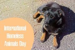 Werelddag van verdwaalde dieren 18 August International Homeless Animals Day royalty-vrije stock afbeelding