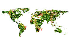 Wereldkaart en bladeren Stock Afbeelding