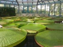 Wereldplantkunde Royalty-vrije Stock Afbeeldingen