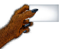 Werewolf Blank Card. Werewolf hand holding a blank card sign as a creepy creature for halloween or scary symbol with textured hairy and textured skin with cursed Stock Photos