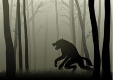 Werewolf In The Dark Woods Stock Photos