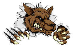 Werewolf or wolf clawing through. A tough wolf animal sports mascot breaking through a wall Royalty Free Stock Images