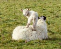 Werfen Sie Stellung auf seiner Mutter ` s Rückseite Stockfoto