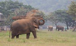 Werfender Schmutz des asiatischen Elefanten an zurück lizenzfreies stockbild