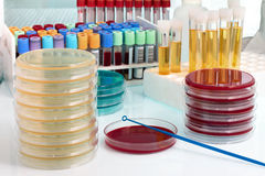 Werkbank met biologische monsters op het de microbiologielaboratorium stock afbeeldingen