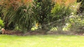 Werkend gazon het water geven systeem in de tuin stock footage