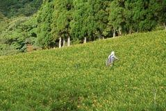 Werkende landbouwer Stock Foto's