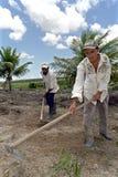 Werkende landbouwer en bediende in landbouw, Brazilië Stock Afbeeldingen