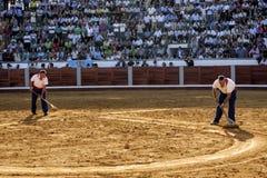Werknemers van de dienst van het plein DE die toros DE Pozoblanco het zand met een hark in Pozoblanco gladmaken Royalty-vrije Stock Fotografie