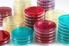Werktisch des Labors mit Petrischalen gestapelt für Kultur Lizenzfreies Stockbild
