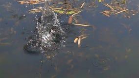 Werp steen in het water stock footage