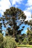Werribee公园在墨尔本,澳大利亚 免版税库存照片