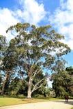 Werribee公园在墨尔本,澳大利亚 免版税库存图片