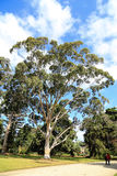 Werribee-Park in Melbourne, Australien Lizenzfreies Stockbild