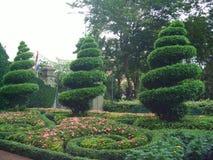 Wervelende kegelvormige bomen Stock Foto's