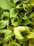 Werveling van vegetatie stock foto