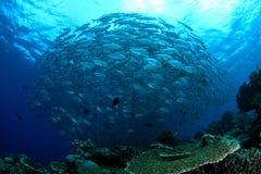 Werveling van vissen Stock Foto's