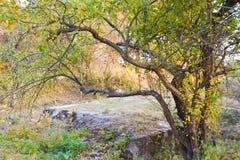 Werwolf, Ruinen von Adolf Hitler-` s sprengen beständige konkrete Bunkerhauptsitze, alten Apfelbaum über einer konkreten Platte lizenzfreies stockbild