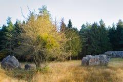 Werwolf, Ruinen von Adolf Hitler-` s sprengen beständige konkrete Bunkerhauptsitze, große Stücke Beton, Stryzhavka, Ukraine lizenzfreie stockbilder