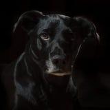 Wesentliches des schwarzen Hundes Stockfoto