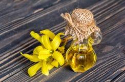 Wesentliches und Blume von Forsythie Stockbild