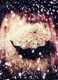 Wesoło boże narodzenia i Szczęśliwe nowy rok dekoracje - Brown cukier fo Obrazy Stock