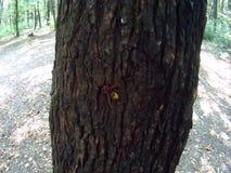 Wesp en vlieginsecten stock videobeelden