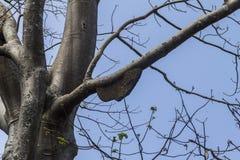 Wesp förtjänar i träd Arkivbild