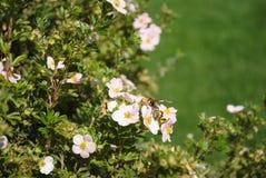 Wesp op bloem Stock Foto's
