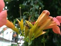 Wesp op de bloem stock foto