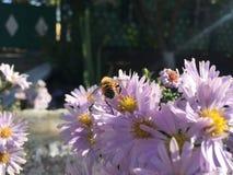 Wesp op een bloem royalty-vrije stock foto's