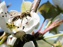 Wespe auf Blume Stockbilder