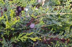 Wespe auf dem wenig hornet& x27; s-Nest Lizenzfreies Stockbild