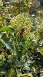 Wespe in der Natur Stockbilder