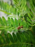 Wespe, die an Farn gegen den starken Wind hält Grünes Blatt mit einem großen Wassertropfen stockfoto