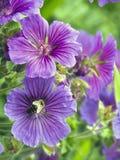 Wespe in einer Blume Stockbild