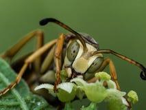 Wespe extrahiert Blütenstaub von der Blume Lizenzfreie Stockfotos