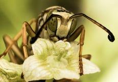 Wespe mit Grün beschmutzten Augen auf grüner Blume stockfotos